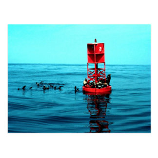 Sea lions on harbor buoy, Ventura, California, U.S Postcard
