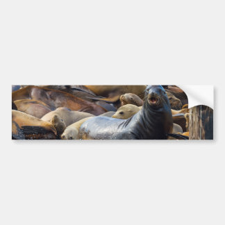 Sea Lions on the Floating Dock in San Francisco Bumper Sticker