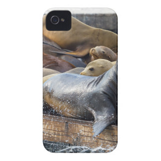 Sea Lions on the Floating Dock in San Francisco Case-Mate iPhone 4 Case