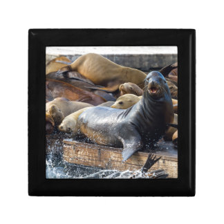 Sea Lions on the Floating Dock in San Francisco Gift Box