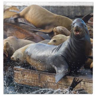 Sea Lions on the Floating Dock in San Francisco Napkin