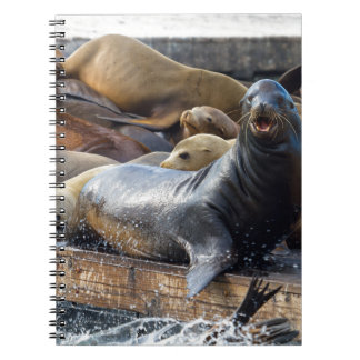 Sea Lions on the Floating Dock in San Francisco Notebooks