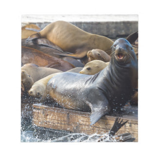 Sea Lions on the Floating Dock in San Francisco Notepad