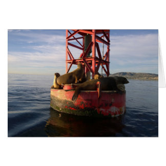 Sea Lions Relaxing on a Buoy in Dana Point Card