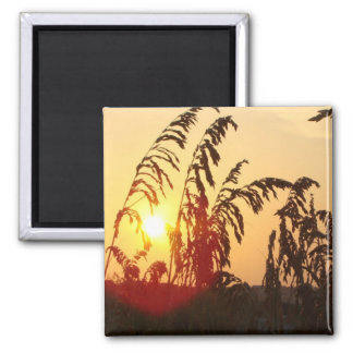 Sea Oat Sunrise Square Magnet