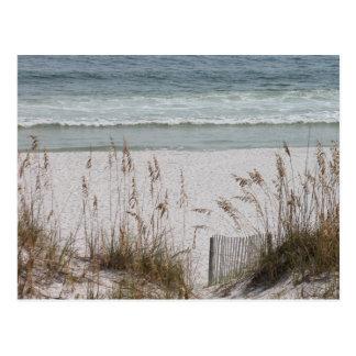 Sea Oats Along the Beach Side Postcard