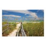 Sea oats Uniola paniculata) growing by beach,