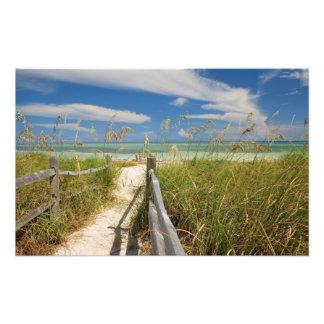 Sea oats Uniola paniculata) growing by beach, Photographic Print