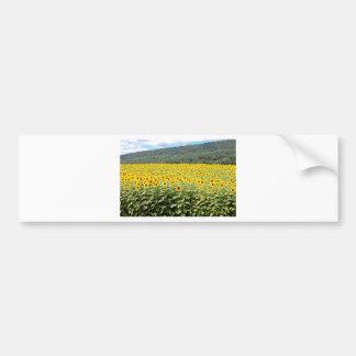 Sea of Sunflowers Bumper Sticker