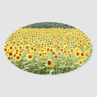 Sea of Sunflowers Oval Sticker