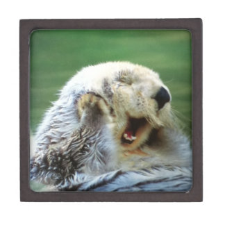 Sea otter box premium keepsake box