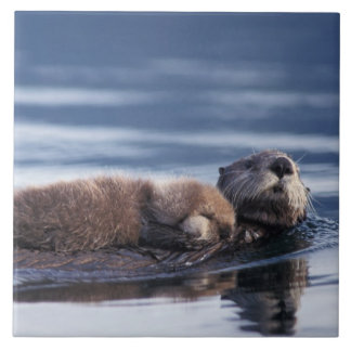 sea otter, Enhydra lutris lutris, mother with Tile