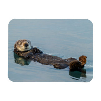 Sea otter floating on back in ocean magnet