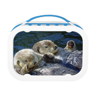 Sea-otter lunchbox