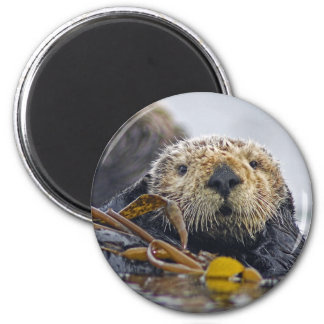 Sea Otter Magnet