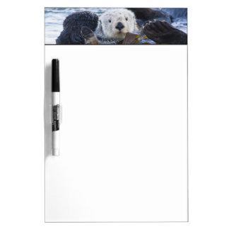Sea otter wrapped in kelp dry erase board