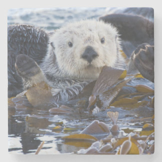 Sea otter wrapped in kelp stone coaster