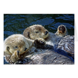 Sea-otters card