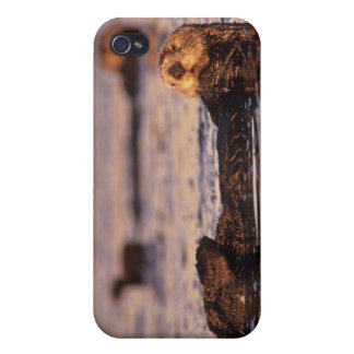 Sea Otters, Enhydra lutris 3 iPhone 4 Cover