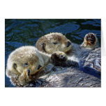 Sea-otters Greeting Card