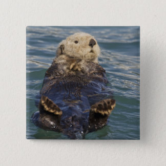 Sea otters play on icebergs at Surprise Inlet 2 Inch Square Button