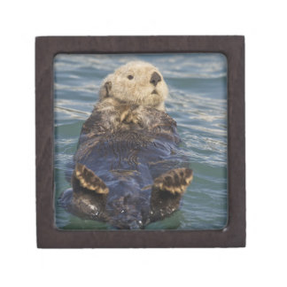 Sea otters play on icebergs at Surprise Inlet Premium Jewelry Boxes
