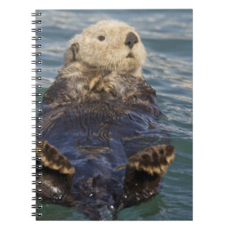 Sea otters play on icebergs at Surprise Inlet Spiral Note Books