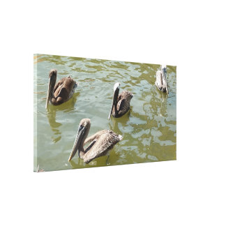 Sea Pelicans Stretched Canvas Print