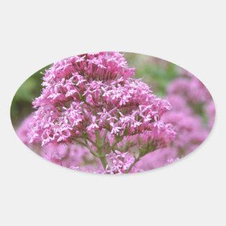 Sea Pink Oval Sticker