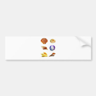 sea shell design bright and colourful bumper sticker
