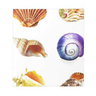 sea shell design bright and colourful notepad