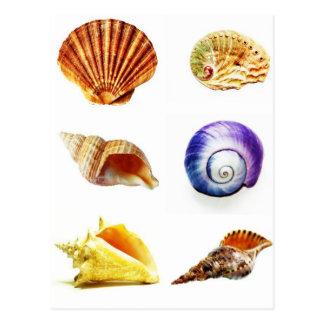 sea shell design bright and colourful postcard