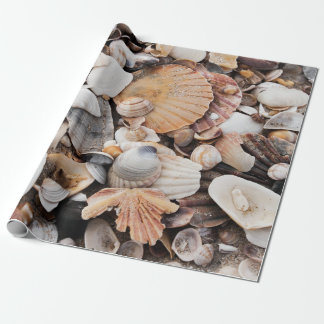 Sea shell design wrapping paper