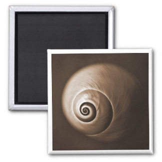Sea Shell in Sepia Magnet