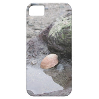 Sea Shell on Driftwood iPhone 5 Cover