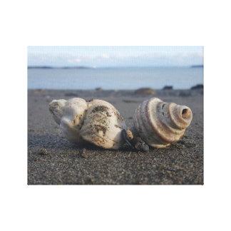 Sea Shell On The Seashore Canvas Print