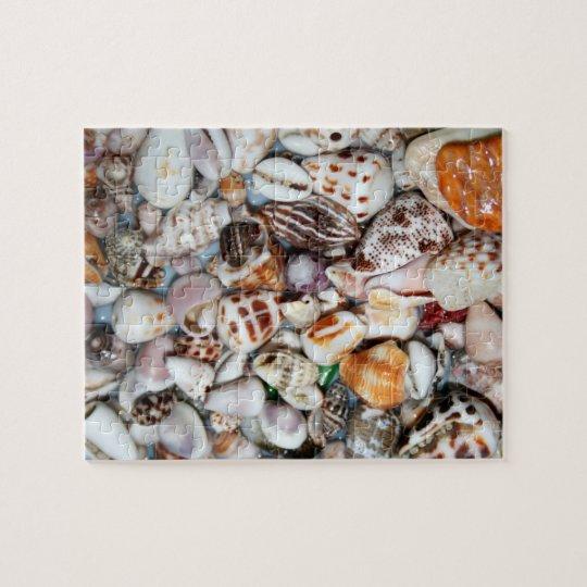 sea shell puzzle