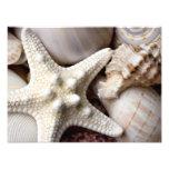 Sea Shell Starfish Background - Beach Shells Photographic Print
