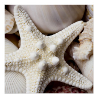 Sea Shell Starfish Background - Beach Shells Poster