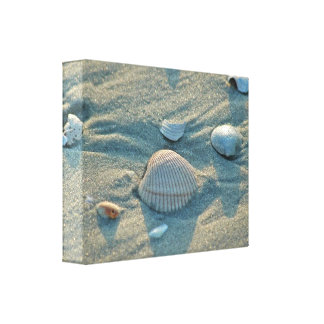 Sea Shell Wrapped Canvas