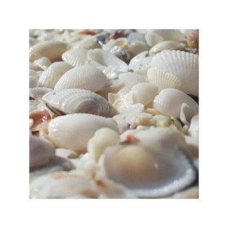 "Sea Shells 12"" x 12"", 1.5"", Single Canvas Print"
