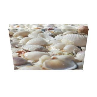 "Sea Shells 14"" x 11"", 1.5"", Single Canvas Print"