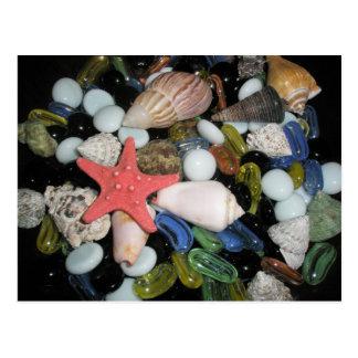 Sea Shells and Rocks Postcard