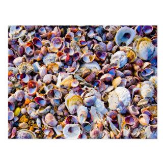 Sea Shells By The Sea Shore Postcard