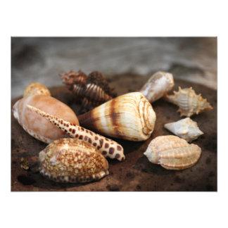 "Sea shells Custom 24"" x 18"" Photo Enlargement"