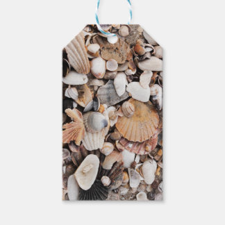 Sea shells gift tag pack of gift tags