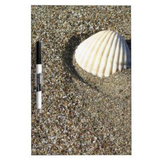 Sea shells on sand. Summer beach background Dry-Erase Board
