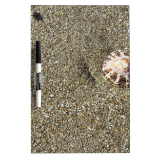 Sea shells on sand. Summer beach background Dry-Erase Boards