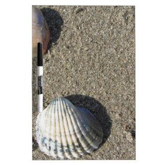 Sea shells on sand. Summer beach background Dry Erase White Board