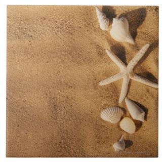 Sea shells on sand tile